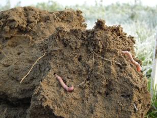 Processus cologiques comment recr er de la porosit - Comment savoir si on a des termites ...