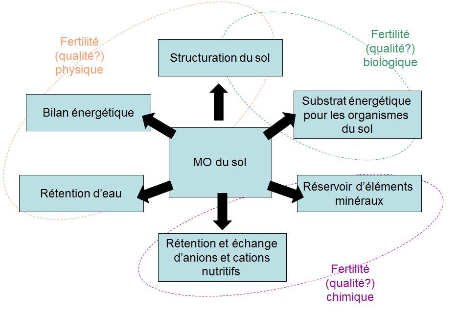 Processus écologiques - Importance de la Matière Organique