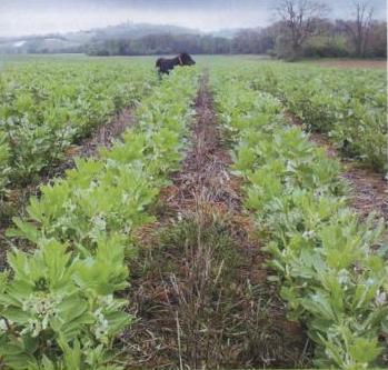 Les plantes de couverture quels couverts utiliser pour for Couverture plante hiver
