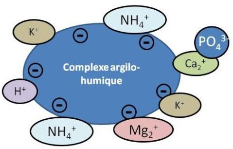 Molecule complexes definition