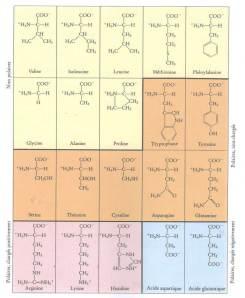 Les bases de la biologie mol culaire composition structure for Bureau tableau 2 en 1