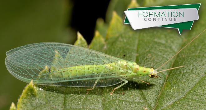 Montpellier supagro - Reconnaitre les insectes xylophages ...